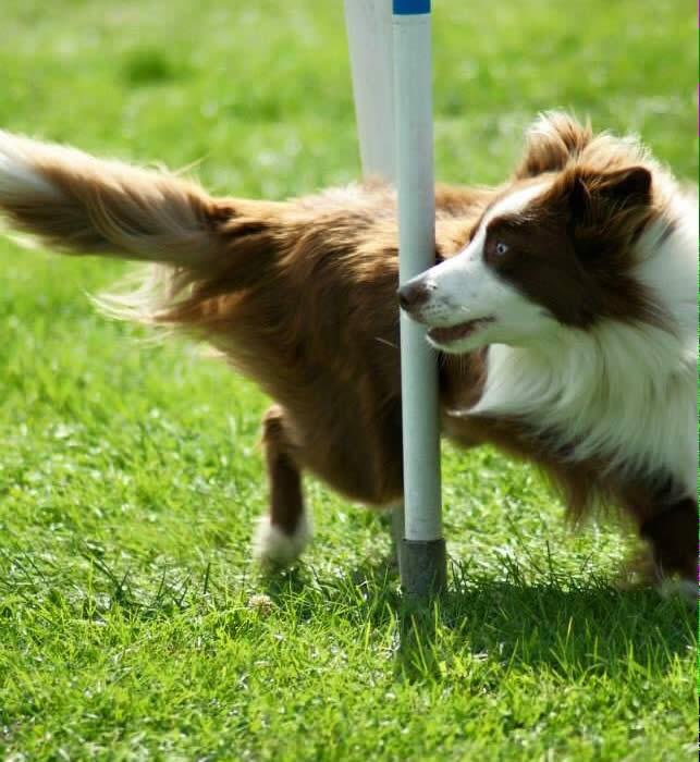 121 Dog Agility Training